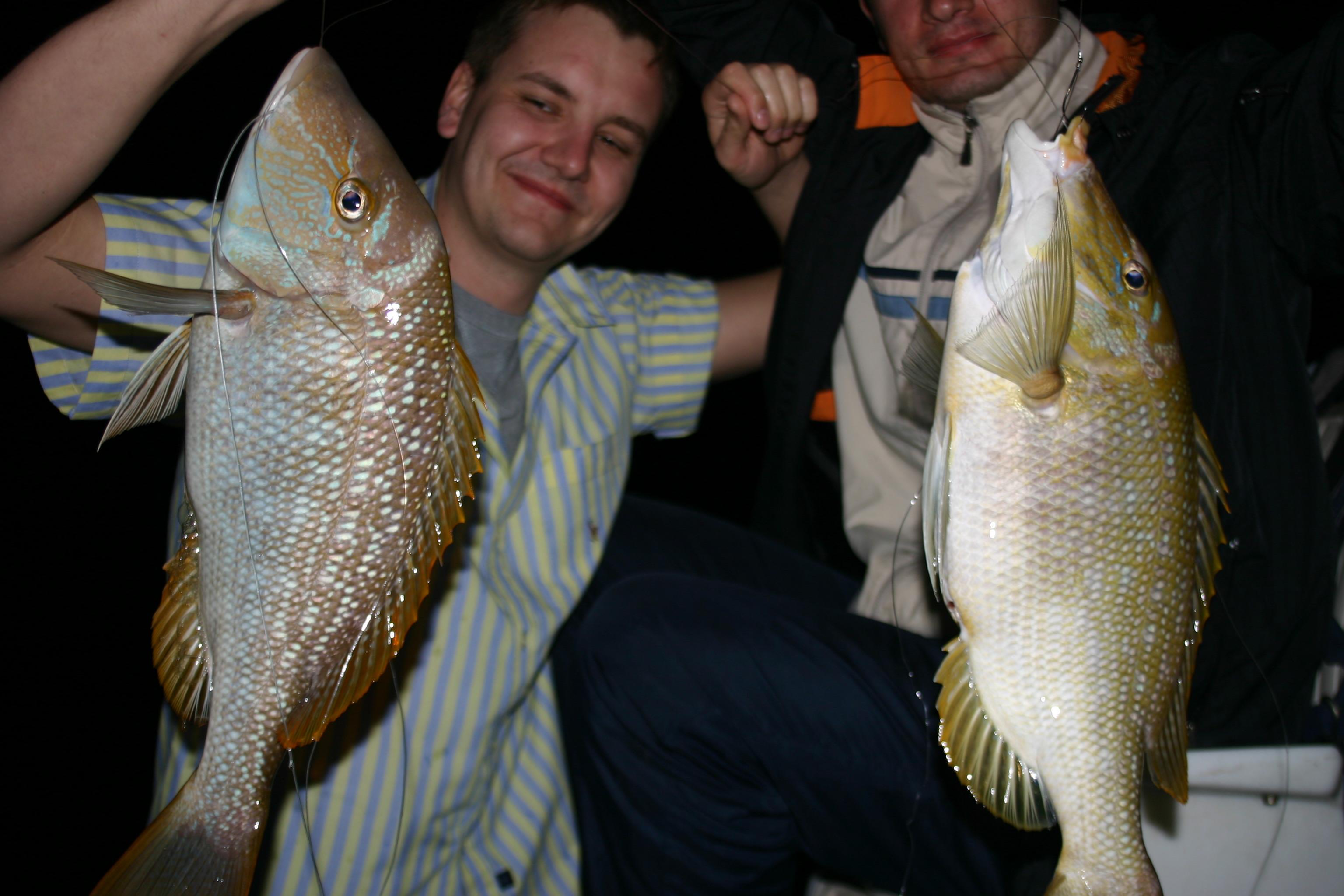 рыбы персидского залива с фото
